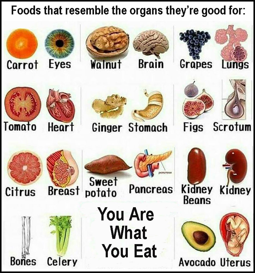 Image result for unclean food leviticus